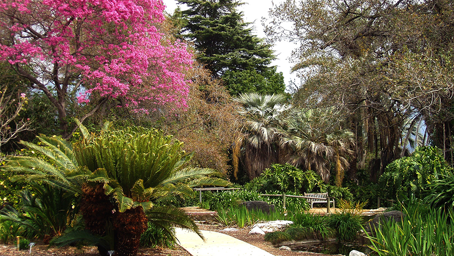 #LA County Arboretum And Botanic Garden - #Travel Guide #FrizeMedia