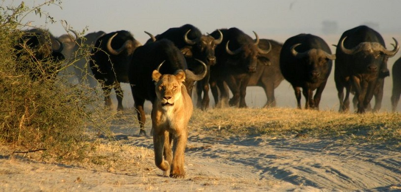 Botswana - Enticing Up Market Safari Destination #FrizeMedia #Travel