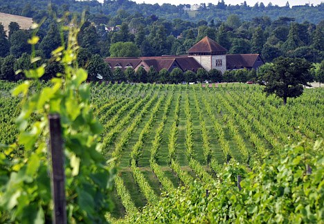 UK Vineyards - Denbies Vineyard Surrey
